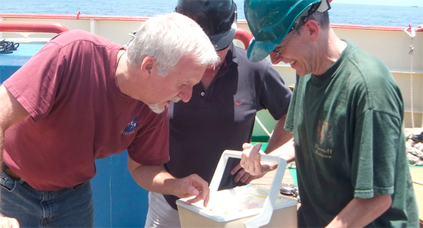 Image: Jim, Ron, and Doug look at big amphipods captured by a lander bait trap