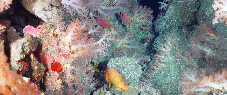 external image mariana-trench-conservation.jpg
